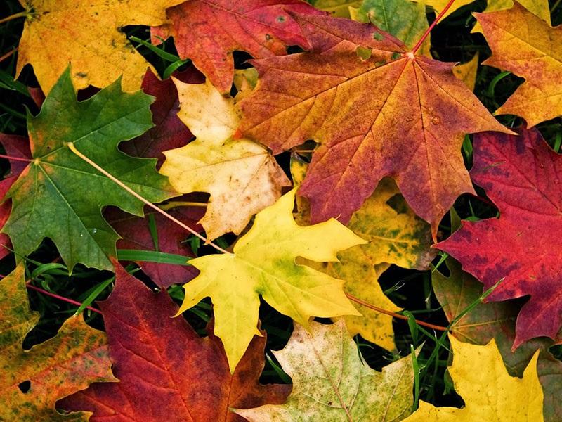 Arriva l'autunno ed è foliage mania: di cosa si tratta?