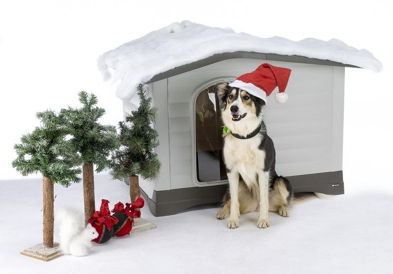 Quando è Natale anche per gli amici a quattro zampe: idee sotto l'albero