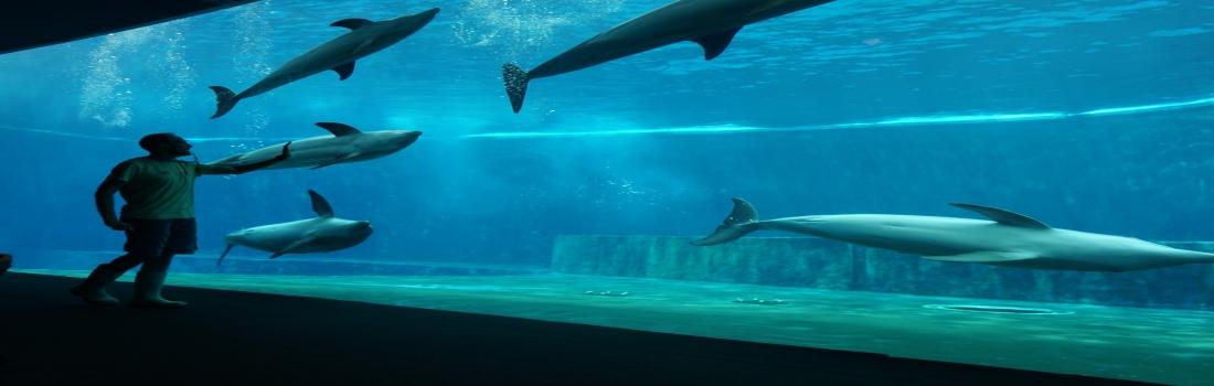 A tu per tu coi delfini:ora all'Acquario di Genova anche di notte
