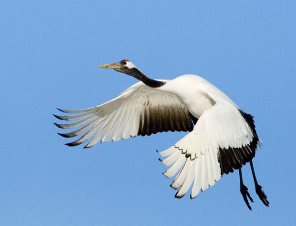 Il buongiorno si vede dal mattino sul cielo dell'Argentario e ha il battito d'ali della felicità
